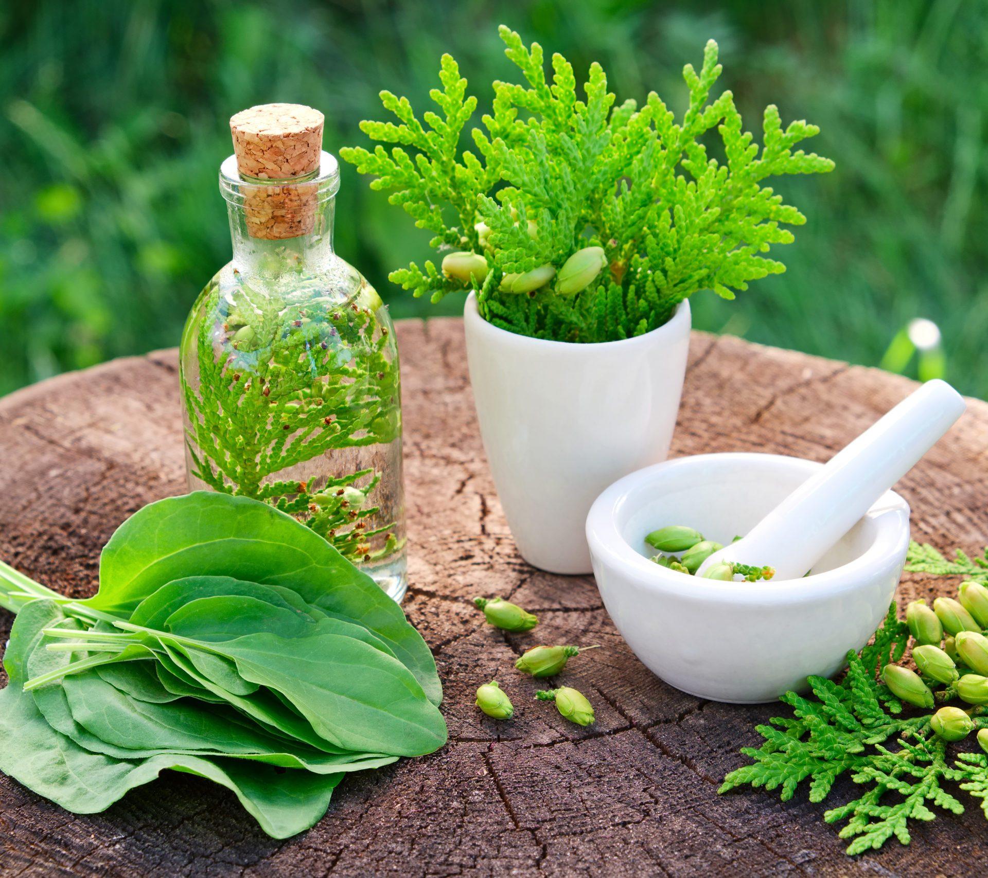 Keamanan Obat Herbal Untuk Ginjal Seseorang